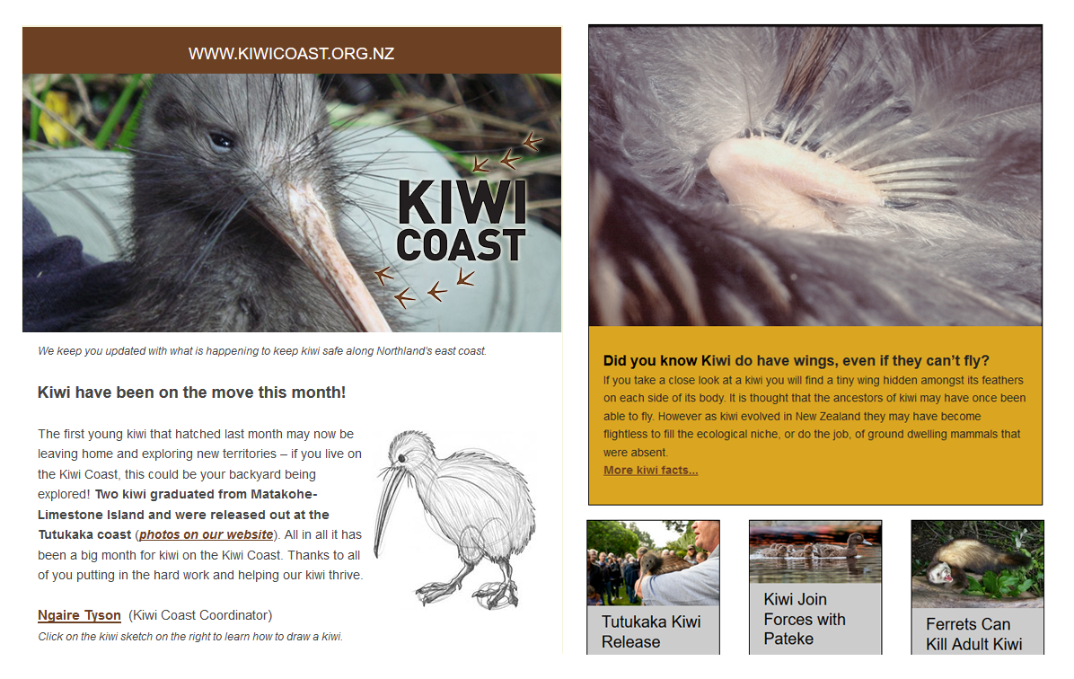 kiwi-coast-newsletter